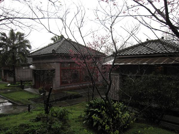 太子賓館後院,櫻花已經悄悄綻放