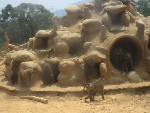 天氣很熱,猴子也沒什麼活動力