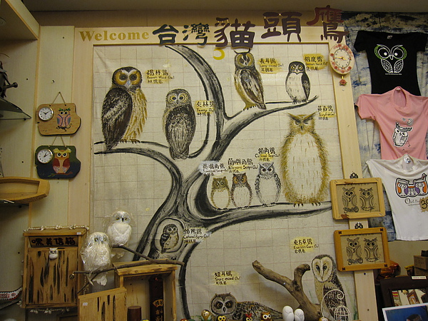 台灣原來有這麼多種的貓頭鷹