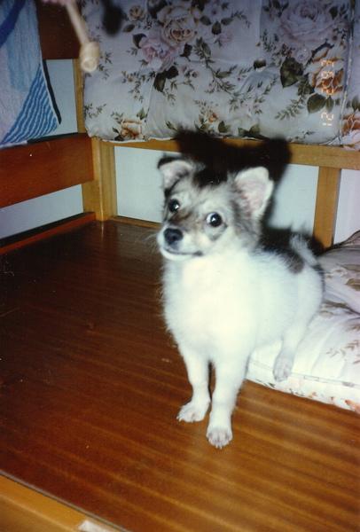 Life幼犬照007.jpg