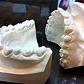 大白鯊的牙齒