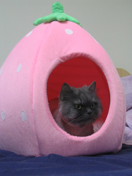 他也有了草莓屋但是是粉紅色