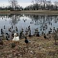 Lafayette Park 058