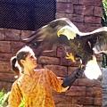 American Eagle2