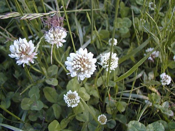 不知名的小白花