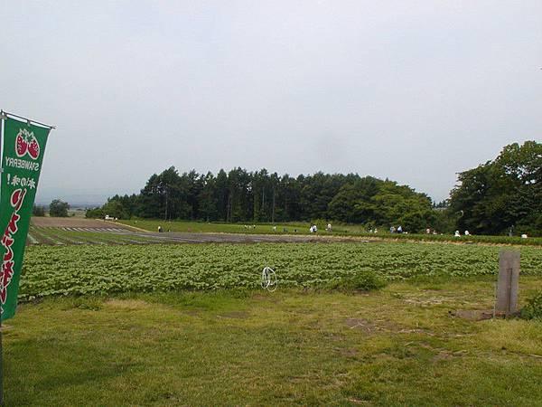花茶的草莓園