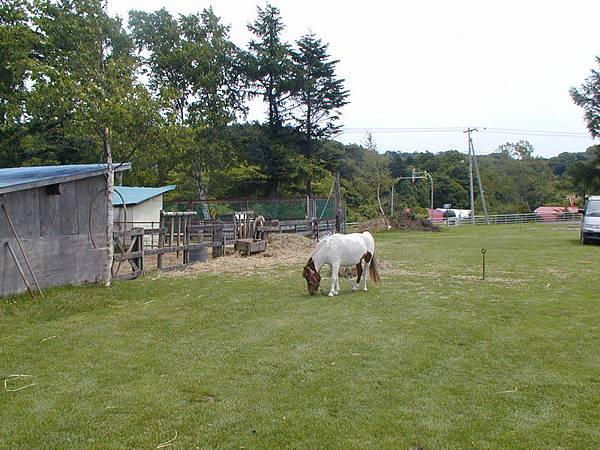 吃草的Pony