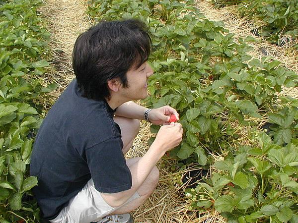 草莓園裡的Hiro