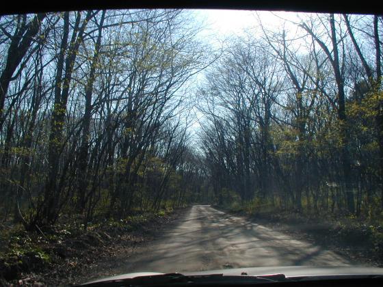 行進在森林中