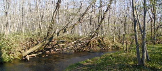 森林裡的河流2