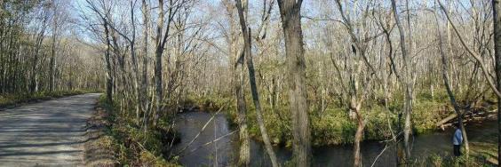 森林裡的河流
