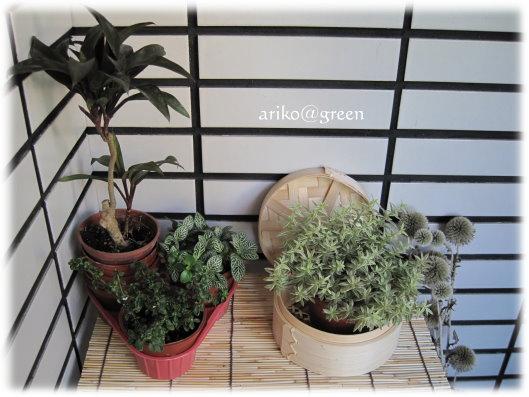 小品盆栽擺設