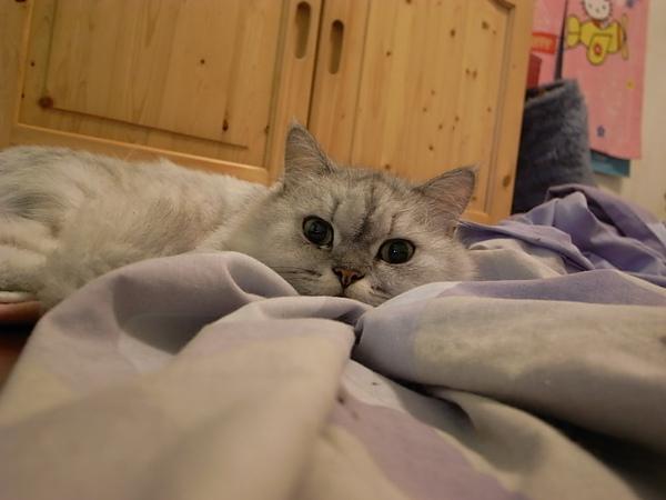 卡妞喜歡在一堆被中睡~~