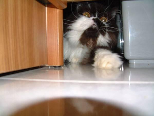 卡拉是夾縫中成長的貓