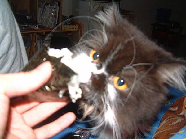 卡拉喜歡吃我們人吃的東西~連飯粒也不放過~~