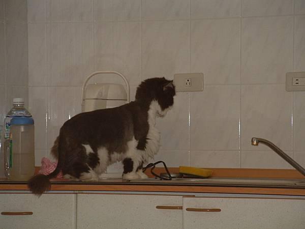 卡拉想開水...當人的第二步~洗手~~
