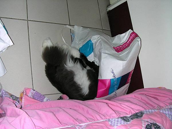 卡拉又躲到袋子去了~~