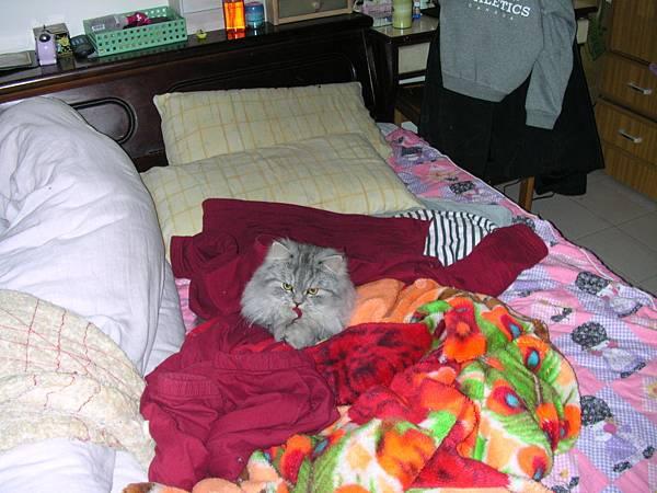 灰皮很喜歡趴我的衣服~我一脫下來他就跑上去躺~~
