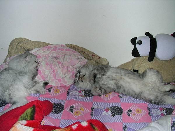 卡妞對灰皮的睡姿也沒輒