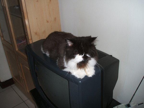 卡拉也滿愛躺在電視上, 不過偶爾會跌倒