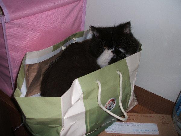 卡拉愛躲袋子