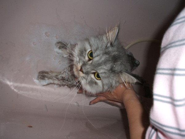 灰皮要在浴缸底才不會亂動~乖乖給洗
