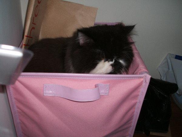 卡拉又躲箱子了~