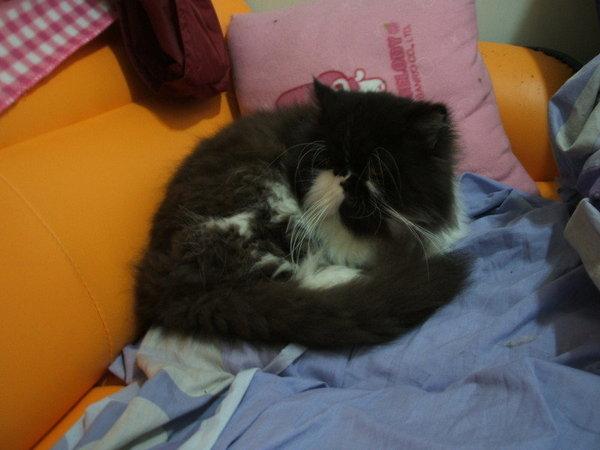 卡拉~在沙發很堅強的卡拉~