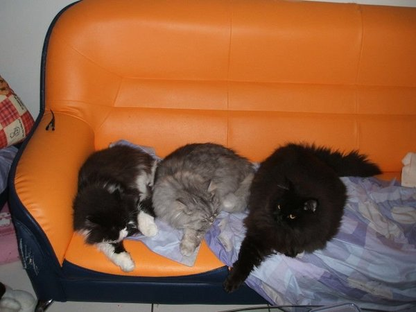 這三隻貓一起躺成這樣~