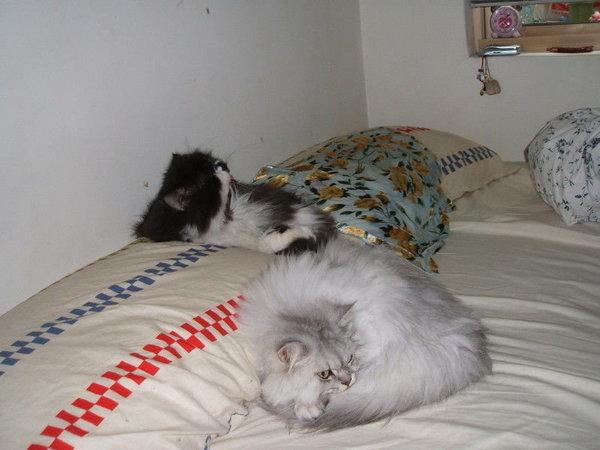 我生病那天這兩隻跟我一起躺~