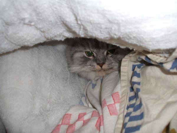 愛躲到棉被洞
