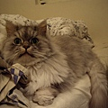 皮愛在床尾睡