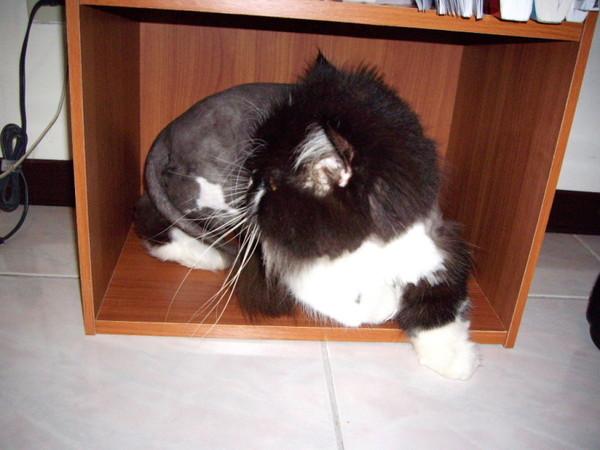 卡拉躲在裡面偷打走過去的貓