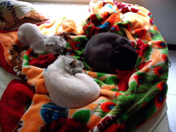 三隻貓睡的很開心~~