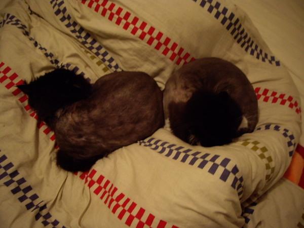 兩隻也愛躺