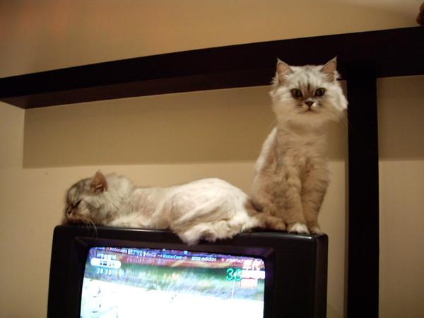 妹一定要躺電視上面~就算沒位置也要等