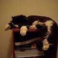 卡拉晚上會自己睡這邊~~