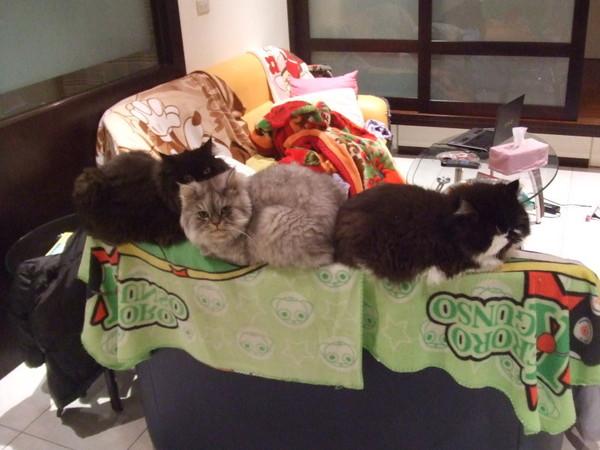三隻貓很擠