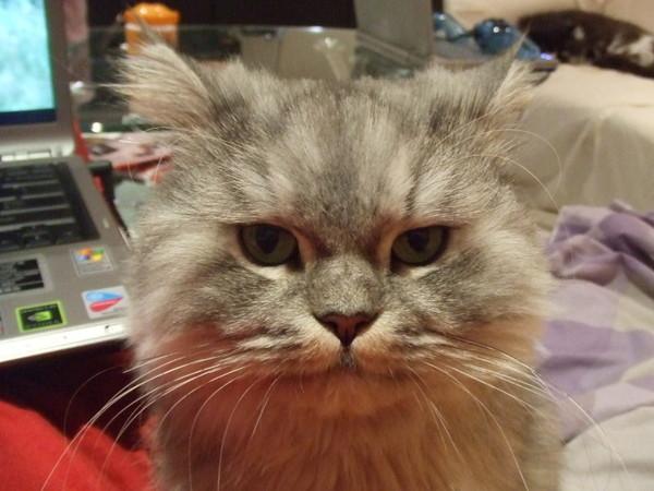 這張照片真的好笑~等吃的臉