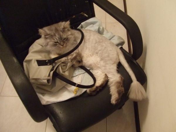 睡我包包還掛圈圈ㄛ~