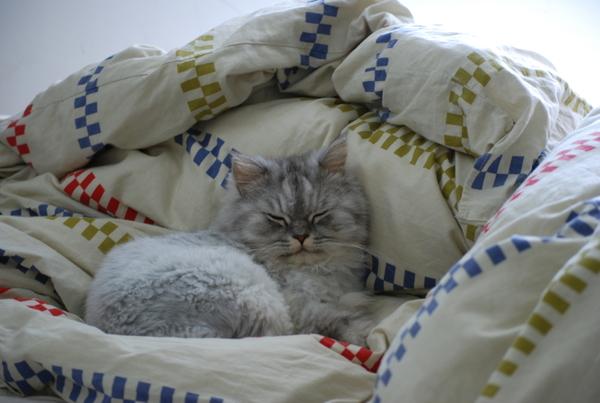灰皮跟卡拉很愛睡棉被