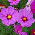 兩朵可愛花~