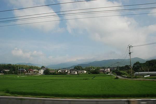 沿路都是稻田勒