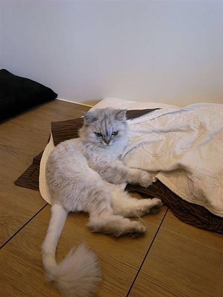 爸爸枕頭套沒有裝不要趴