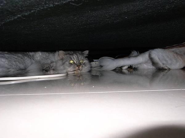 某天樓下方鞭炮~灰皮嚇死了~右邊有沒有看到卡妞再麻出去~