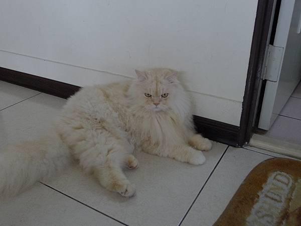 表姐家的貓~