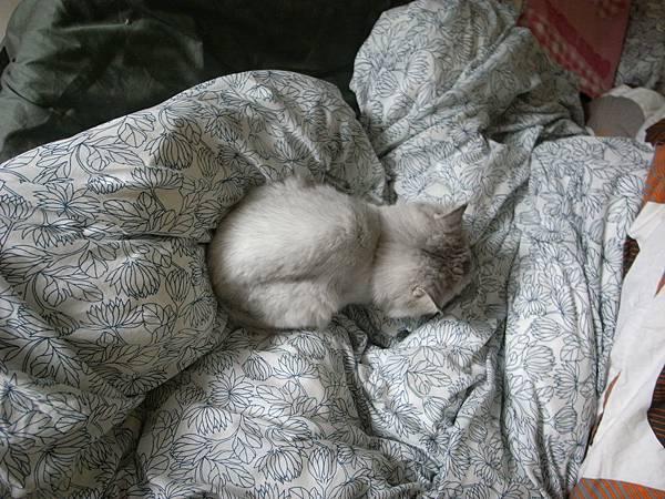 又躺在被中的卡妞~