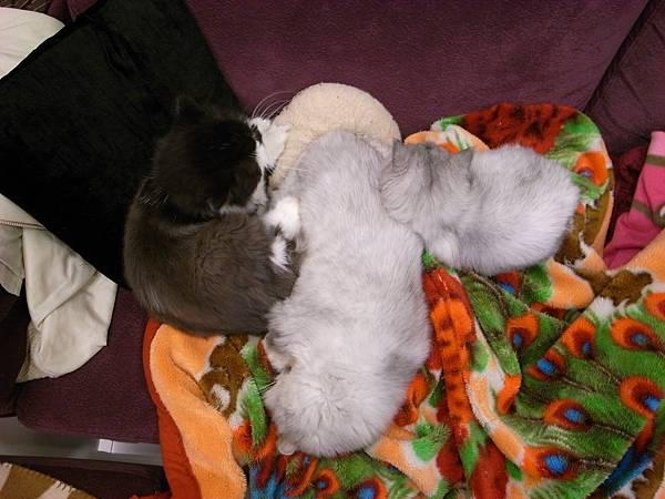 這三隻貓好好笑~~