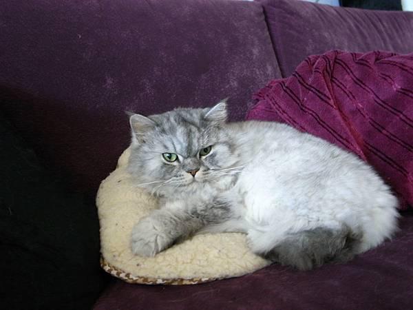 喜歡小黃枕的灰皮~好可愛~