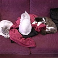 卡妞是個很喜歡躺在高處的貓..很好笑~